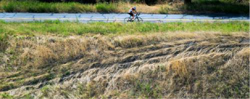 Steve Griffin  |  The Salt Lake Tribune  A cyclist pedals up City Creek Canyon Road in Salt Lake City, Tuesday, July 14, 2015.