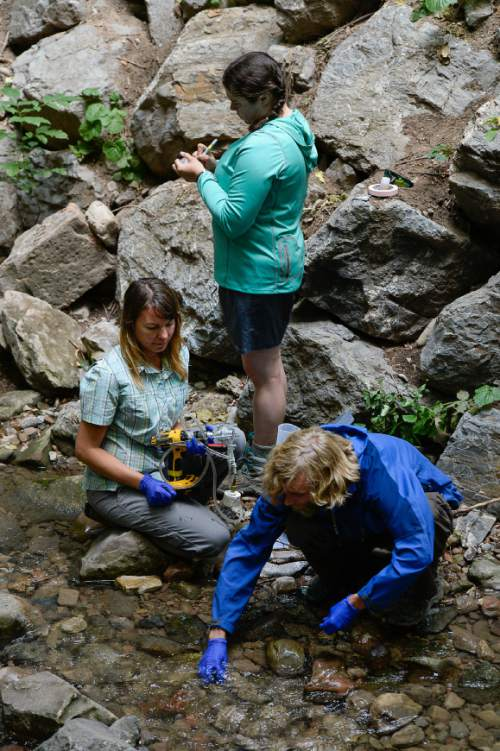 Francisco Kjolseth     The Salt Lake Tribune Melissa Haeffner, left, Rachel Gabor and Matthew Johnson gather water samples in Miller Park in an effort to understand the Red Butte Creek watershed like never before. Researchers gathered to study all aspects of the creek and its surrounding watershed in a collaborative, four-day venture. The study of 40 sites along the river began at 1100 East and will end at the source at the top of Red Butte Canyon.