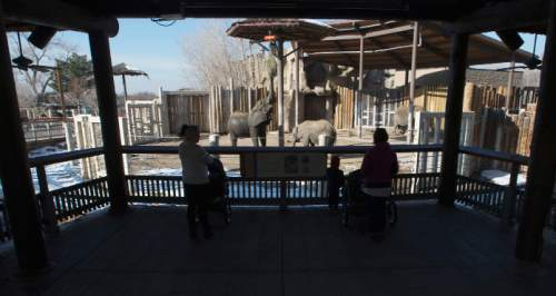 Steve Griffin  |  The Salt Lake Tribune  Elephants stretch to get their food at Utah's Hogle Zoo in Salt Lake City, Thursday, January 8, 2015.  Last year, the zoohad its second highest number of visitors ever.