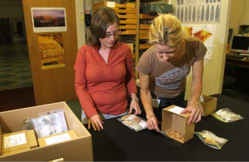 Rick Egan   |  The Salt Lake Tribune  L-R Rebecca Rowe and Anne Sager, look at tiny bones from the Homestead Cave, at the Utah Museum of Natural History, Friday, October 29, 2010.  The bones found in the Homestead Cave in the West Desert, were deposited by owls over centuries,  and have provided info about mammal populations and the effects of climate change. Materials unearthed at the cave are stored at the Museum of Natural History.