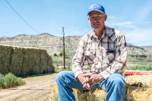 Chris Detrick     The Salt Lake Tribune Link Chynoweth poses for a portrait on his ranch in Escalante Thursday July 30, 2015.