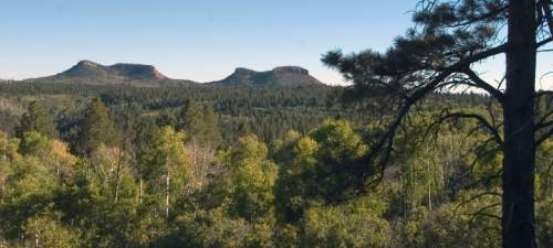 "A view across the forested high country of Elk Ridge with the ""Bears Ears"" in the distance.  This is the rugged terrain of the Elk Ridge premium limited entry elk hunting unit in San Juan County where some of the biggest elk in Utah roam.    Hartmann/photo  9/18/04"