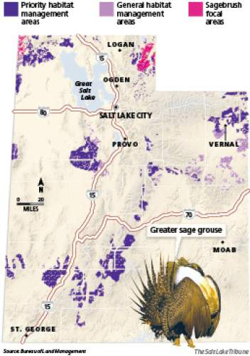 """Greater sage grouse habitat areas The Bureau of Land Managment's conservation plan for the greater sage grouse in Utah lists three habitat designations, including about 2.7 million acres of """"priority habitat"""" where development will be subject to new rules. Surface disturbance will be limited and no development can occur around the breeding grounds known as leks."""