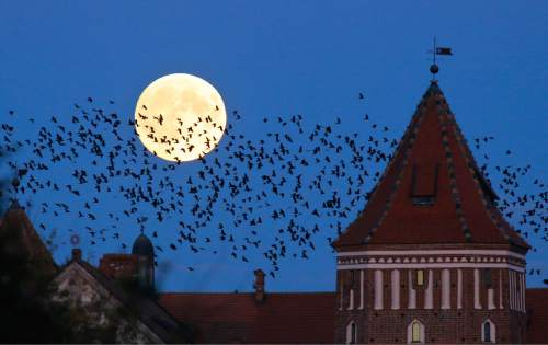 "A  flock of birds fly by as perigee moon, also known as a super moon, rises above a medieval castle in Mir, Belarus, 95 kilometers (60 miles) west of capital Minsk, Belarus, late Sunday, Sept. 27, 2015. The full moon was seen prior to a phenomenon called a ""Super Moon"" eclipse that will occur on Monday, Sept. 28. (AP Photo/Sergei Grits)"