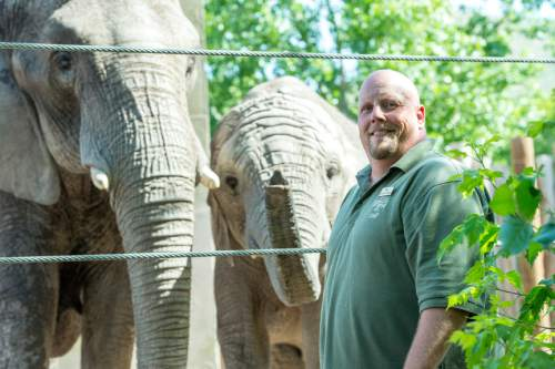 Chris Detrick  |  The Salt Lake Tribune Elephant Manager Eric Peterson poses for a portrait with Christie and Zuri at Utah's Hogle Zoo Wednesday June 3, 2015.