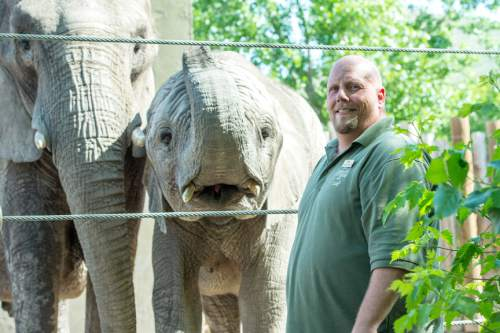 Chris Detrick  |  The Salt Lake Tribune Elephant Manager Eric Peterson poses for a portrait with Christie and Zuri at Utah's Hogle Zoo Wednesday June 3, 2015..