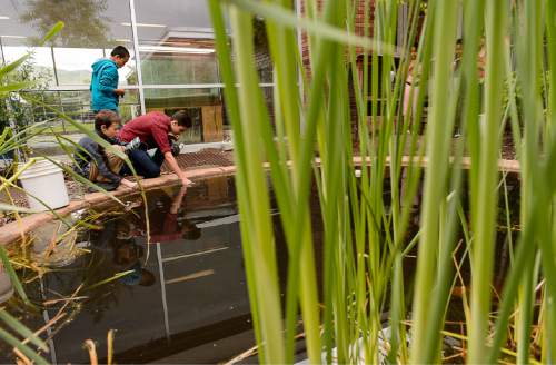 Trent Nelson  |  The Salt Lake Tribune Max Porter, Andres Sanchez, and Gilberto Rejon takes samples from a pond at the Salt Lake Center for Science Education in Salt Lake City, Tuesday May 19, 2015.