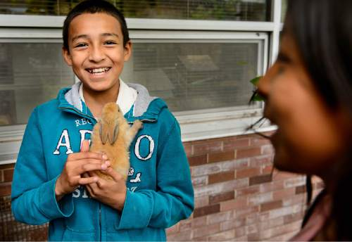Trent Nelson  |  The Salt Lake Tribune Gilberto Rejon holds a rabbit at the Salt Lake Center for Science Education in Salt Lake City, Tuesday May 19, 2015.