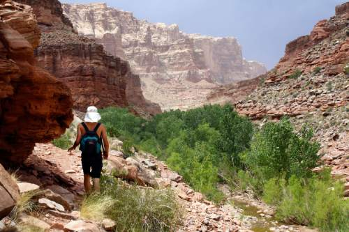 Al Hartmann  |   Tribune file photo Hiker negotiates a way in Dark Canyon Wilderness in San Juan County.  The area is included for a proposed Bears Ears National Conservation Area.