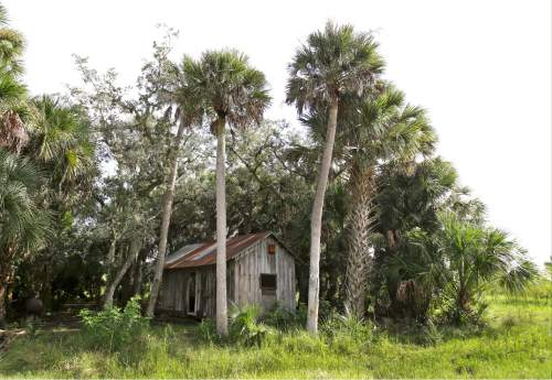 In this Wednesday, Sept. 30, 2015, photo, a small shack used by cowboys to camp overnight is seen on a section of land in Deseret Ranch, Fla. Over the next six decades, the plan being developed by the Mormon church-owned Deseret Ranch promises to convert the largest undeveloped section of metro Orlando into more than a dozen bustling neighborhoods. (AP Photo/John Raoux)