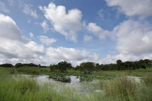In this Wednesday, Sept. 30, 2015, photo, a marsh area is seen at the Deseret Ranch in Florida. Over the coming six decades, housing developments will replace citrus trees, and office parks will replace cattle-grazing under a plan being developed by the Mormon church-owned Deseret Ranch located southeast of Orlando. (AP Photo/John Raoux)