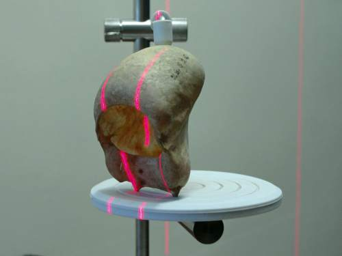 Jacob C. Dunn | A 3-D laser scans a howler monkey hyoid bone.