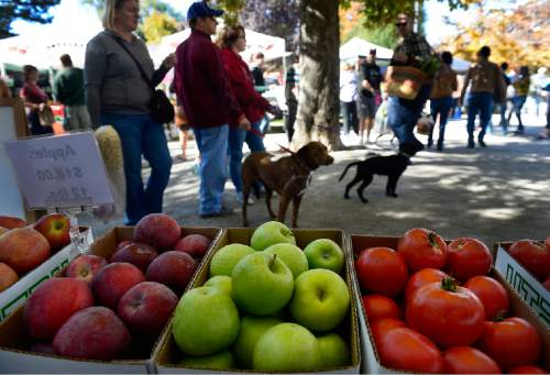 Scott Sommerdorf   |  The Salt Lake Tribune Visitors to the last Farmers Market in Pioneer Park, walk past some of the fresh produce available at the Wilkerson Organic Farm booth, Saturday, October 24, 2015.