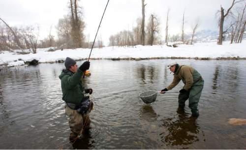 Al Hartmann photo | Salt Lake Tribune Ken Mahal, left, a fishing guide for Park City Outifitters, catches a Brown Trout  in the chilly water of the Middle Provo River Monday just west of Heber City.  His fly fishing client Kevin Foley from Minneapolis, MN lowers the net to get the prize.   Fishermen were scarce on the river but the fishing was good.