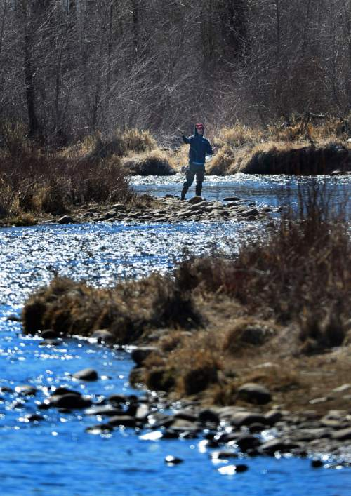 Scott Sommerdorf   |  Tribune File Photo A fly fisherman casts his line in the middle Provo river near Midway. Anglers hope a court ruling Wednesday will relieve crowding on the Provo by invalidating a law that blocks access to Utah rivers flowing over private property.