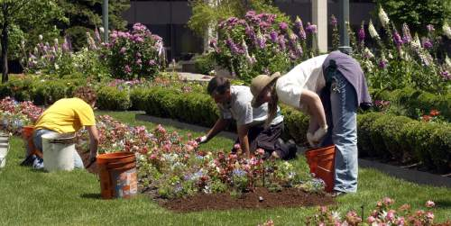 Temple Square gardeners l to r Erica Larson, Thayne Whiting and Annika Bybee mulch a flower bed near the Joseph Smith Building in downtown SLC.   Mulching helps keep weeds down and moisture in .   With the temperatures coming down to normal range this week the gardens are full splendor.    Hartmann/photo    6/4/03