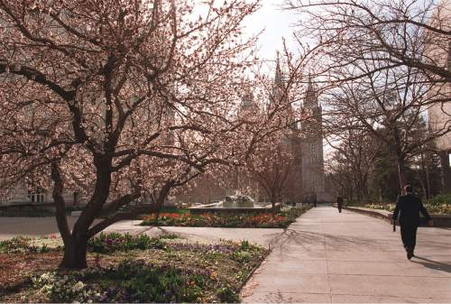 Al Hartmann  |  Tribune File Photo Flowering trees are out with tulips right behind iin time for Spring Conference at Temple Square in 1998.