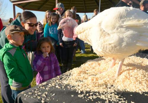 Leah Hogsten  |  The Salt Lake Tribune Rachel Martinez and her two children Max and Lucia get a bird's eye view of the pardoned turkey. Turko, a 21-week-old, 57 pound turkey was spared Wednesday, November 26, 2014 by Lt. Gov. Spencer Cox from becoming a Thanksgiving feast during the Fourth Annual Utah Turkey Pardon at Thanksgiving Point. Turko will roam free in his new home at Thanksgiving Point's Farm Country.