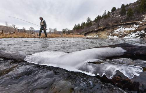 Francisco Kjolseth | The Salt Lake Tribune Brady Willison on Tuesday walks along a braided channel on a stretch of the Upper Provo that cuts through the 7,000-acre Victory Ranch, a luxury destination near Francis. Until a Nov. 4 court ruling invalidating Utah's restrictive stream access law, such streams were not available to anglers without property owners' permission. Stream access advocates successfully sued Victory Ranch, claiming that the landowners' practice of keeping non-guests off the river violates an easement the public has to stream beds. But without further guidance from the court, the scope of that easement is not clear, lawyers say. Victory Ranch insists the ruling should be stayed pending its appeal, which it expects to win.