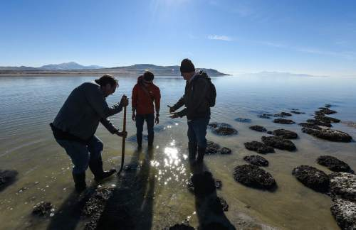 Francisco Kjolseth | The Salt Lake Tribune Researchers gather at The Great Salt Lake to gather small rock like structures formed by cyanobacteria known as microbialites. Will Black, left, and Tim Lee, center, an exhibit designer with the Natural History Museum are joined by Thomas geologist Thomas Chidsey as they carefully pull a structure for a living exhibit.These domed structures cover about 386 square miles, nearly 23 percent of the lake's bed, and offer a glimpse of what the Earth was like for its first 3 billion years.