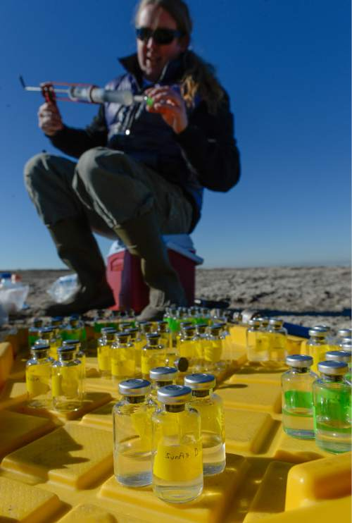 Francisco Kjolseth | The Salt Lake Tribune Eric Boyd, a Professor of Microbiology at MSU in Boseman Montana gathers water samples from the Great Salt Lake. Researchers were pulling small rock like structures formed by cyanobacteria known as microbialites. These domed structures cover about 386 square miles, nearly 23 percent of the lake's bed, and offer a glimpse of what the Earth was like for its first 3 billion years.