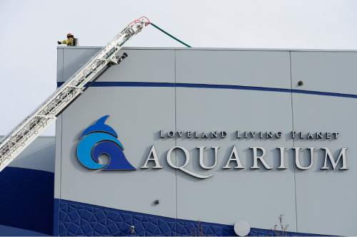 Scott Sommerdorf   |  The Salt Lake Tribune UFA firefighters on the roof investigate a two-alarm fire at the Loveland Living Aquarium in Draper, Sunday, December 13, 2015. The fire was limited to the rooftop, and no animals were affected in the aquarium.