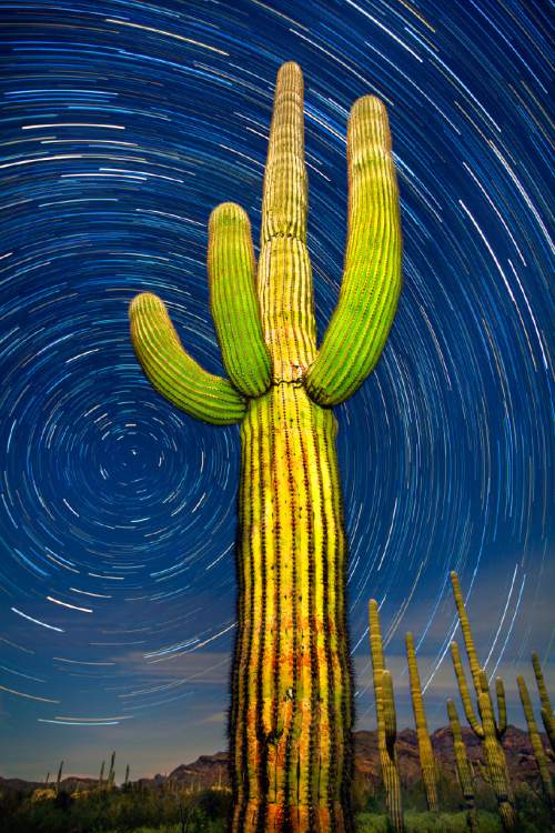 "Organ Pipe Cactus National Monument, Arizona: a 75 minute time lapse of a giant saguaro and the northern sky.  From"" The National Parks: An American Legacy,"" published by Earth Aware Editions. Courtesy  