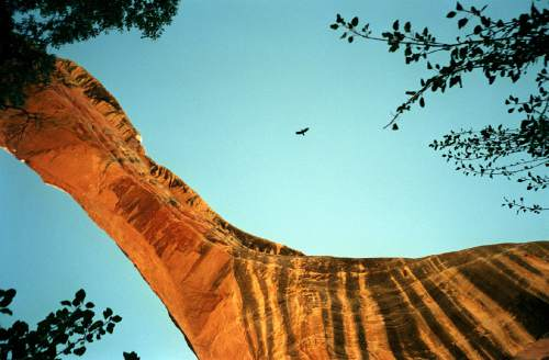 Al Hartmann  |  Tribune file photo  A crow flies over Sippapu Bridge in Natural Bridges national Monument. This is among the areas that would be affected by draft legislation that Rep. Rob Bishop intends to unveil Wednesday.