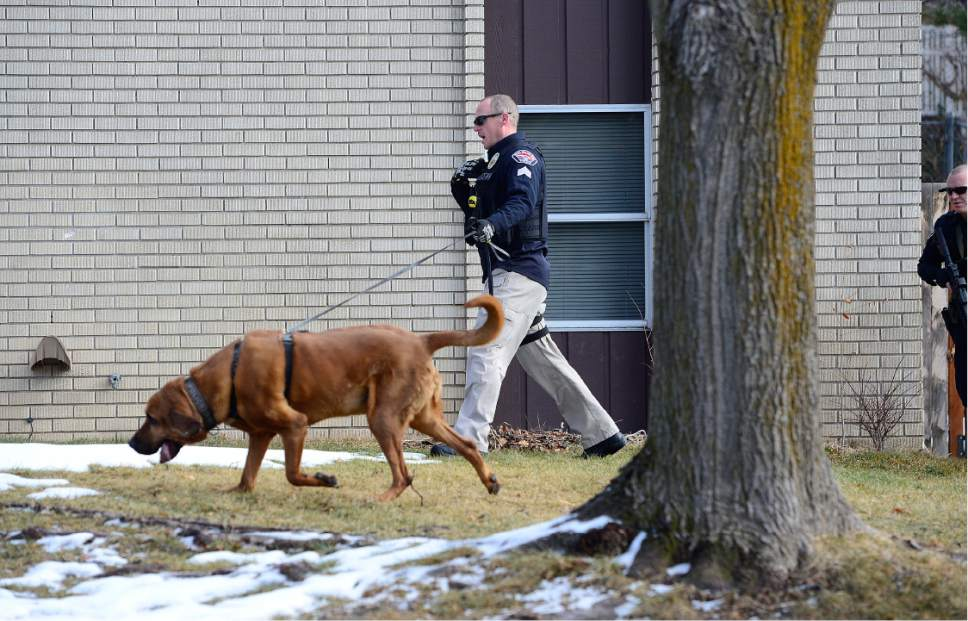 Scott Sommerdorf   |  The Salt Lake Tribune A Unified Police officer works a search of the neighborhood with a search dog. Police at the scene of an officer-involved shooting, in Holladay, Sunday, January 17, 2016.