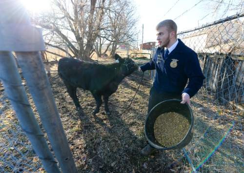 Francisco Kjolseth | The Salt Lake Tribune Sawyer Barker tries to coax one of the student owned steers into another pen. At Roots, Utah's first farm-based charter school in West Valley City, students get hands on experience working at the school's farm just down the street from the school. A legislative task form is recommending changes to the way Utah's charter schools are funded.