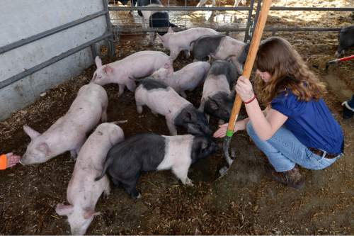 Francisco Kjolseth | The Salt Lake Tribune Katelinn Mix greets the student-owned pigs while cleaning out their pen in an Intro to Agriculture class. At Roots, Utah's first farm-based charter school, in West Valley City, students get hands-on experience working at the school's farm just down the street. A legislative task force is recommending changes to the way Utah's charter schools are funded.