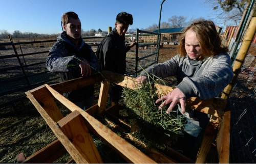 Francisco Kjolseth | The Salt Lake Tribune Justin Lansberry, Erik Miranda and Matthew Hamelin, from left, feed the goats as part of their school's farm program. At Roots, Utah's first farm-based charter school, in West Valley City, students get hands-on experience working at the school's farm just down the street. A legislative task force is recommending changes to the way Utah's charter schools are funded.