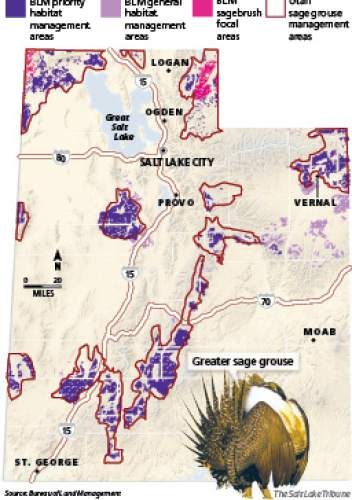 "Greater sage grouse habitat area BLM's conservation plan for Utah designates three habitat types carrying different levels of land-use restrictions. Surface disturbance is heavily restricted on the 2.7 million acres included in ""priority habitat"" and ""sagebrush focal"" areas. Utah's more flexible sage grouse management plans outlines 11 areas where officials encourage voluntary measures."