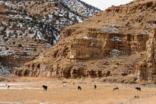 Trent Nelson  |  The Salt Lake Tribune Horses in Nine Mile Canyon, Tuesday January 19, 2016.