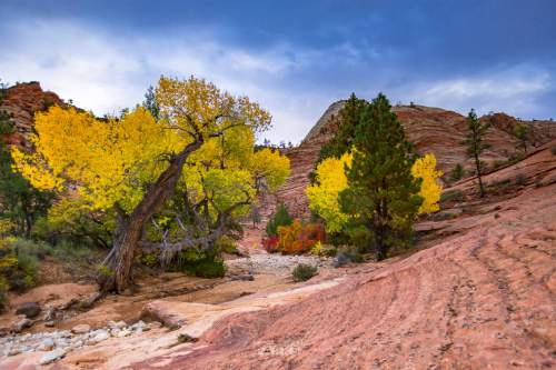 """Brothers Jim and Will Pattiz, creators of the """"More Than Just Parks"""" project, are shooting short videos of 59 National Parks throughout the United States. The latest features Zion National Park.   Courtesy: Jim Pattiz"""