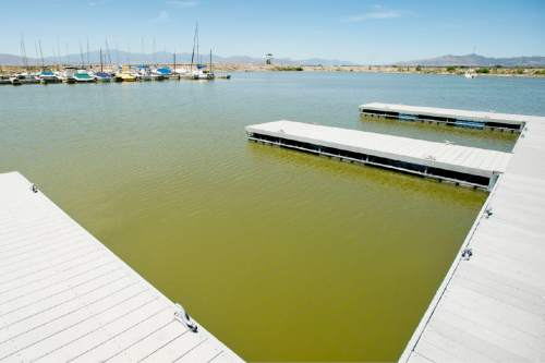 Steve Griffin  |  The Salt Lake Tribune   The Lindon Marina in Orem, Thursday, July 30, 2015.  State water quality managers estimate 44 percent of Utah waterways are at risk for the same kinds of toxic algae plaguing Utah Lake. The toxins are blamed for two dog deaths and the demise of two cows. But the state has not allocated much, if any, funding for monitoring and treatment.