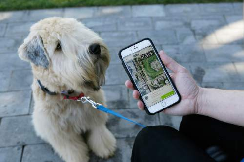 """n this photo taken Wednesday, Feb. 24, 2016, Russell Gipson Shearer displays on his phone how the Whistle pet tracker follows his dog Rocket in San Francisco. Technology isn't just for humans. It's also for their furry friends. In Silicon Valley and beyond, a growing number of """"pet-tech"""" startups are selling devices to keep pets safe, healthy, entertained and connected when their owners are away. (AP Photo/Eric Risberg)"""