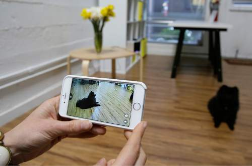 """In this photo taken Wednesday, Feb. 24, 2016, Yulia Zimmermann demonstrates using her phone to watch Pusher, a Pomeranian dog, with the interactive wi-fi pet camera Petcube in San Francisco. Technology isn't just for humans. It's also for their furry friends. In Silicon Valley and beyond, a growing number of """"pet-tech"""" startups are selling devices to keep pets safe, healthy, entertained and connected when their owners are away. (AP Photo/Eric Risberg)"""