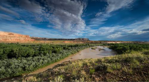 Ellen Morris Bishop  |  Courtesy  Residents of Bluff propose developing an eight-mile non-motorized trail network along this scenic stretch of the San Juan River, connecting the town with the Sand Island recreation site a few miles downstream from the southeast Utah town.