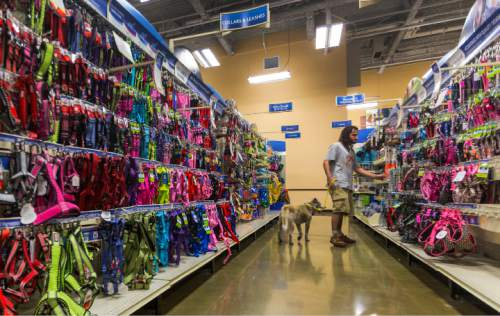 In this Wednesday, March 16, 2016, photo, Kevin Geiger shops with his newly-adopted Korean Jindo mix dog, Astro, at the PetSmart Midtown store in Los Angeles. Americans spent just over $60 billion on their pets in 2015, a record fueled by a big jump in what owners shelled out for services like grooming, boarding and training.  (AP Photo/Damian Dovarganes)