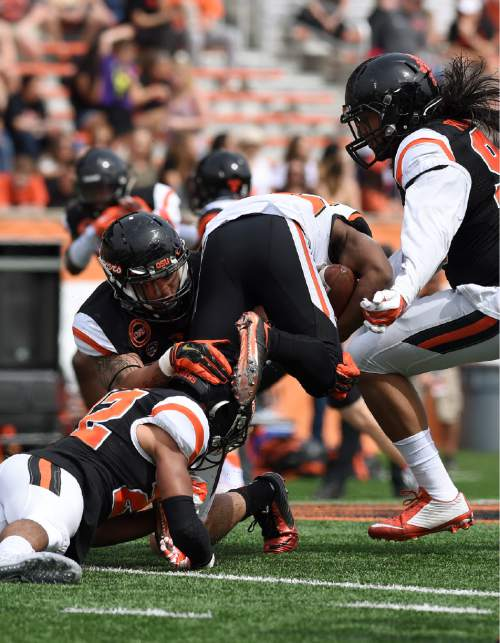Oregon State running back Kieran Yancy, center, is tackled by linebacker Caleb Saulo, upper left, and cornerback Xavier Crawford, lower left, during the NCAA college spring football game Saturday, April 16, 2016, in Corvallis, Ore. (Godofredo Vasquez/The Gazette-Times via AP)