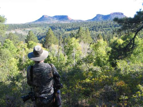 Tribune file photo Photographer explores the high forested plateau country near the Bear's Ears in San Juan County.  The area is included for a proposed Bears Ears National Conservation Area.