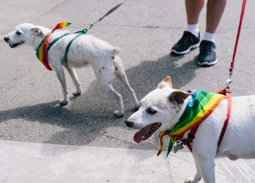 SALT LAKE CITY, UTAH - May 14, 2016:  Court Bello brought his two dogs Baloo, left, and Cannon to the Harvey Milk Boulevard unveiling ceremony in Salt Lake City on Saturday, May 14, 2016.