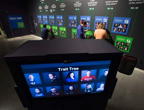 """Steve Griffin / The Salt Lake Tribune  The Natural History Museum of Utah will open """"Genome: Unlocking Life's Code,"""" a new exhibit that explores how scientists (including many from University of Utah Health Sciences) have unlocked the mysteries of the human genome for the benefit of humankind. This part of the exhibit places visitors on the trait tree based on questions you answer at the museum in Salt Lake City Thursday May 19, 2016."""