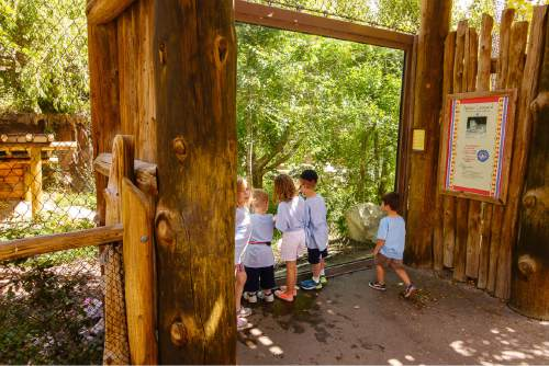 Trent Nelson  |  The Salt Lake Tribune Children at the leopard enclosure at Hogle Zoo in Salt Lake City, Tuesday June 7, 2016, after an endangered leopard escaped the enclosure. No injuries were reported and the beast was soon cornered by staff and sedated.