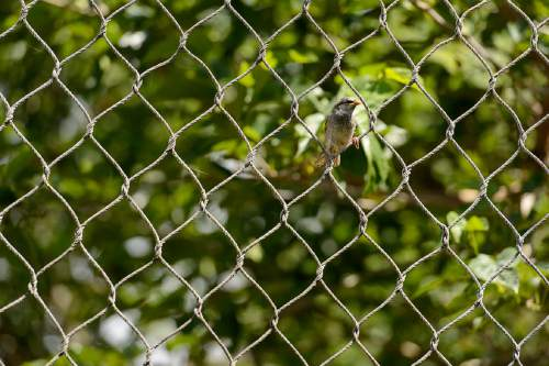 Trent Nelson  |  The Salt Lake Tribune A bird sits in the fencing of the leopard enclosure at Hogle Zoo in Salt Lake City, Tuesday June 7, 2016. An endangered leopard escaped the enclosure late Tuesday morning, but no injuries were reported and the beast was soon cornered by staff and sedated.