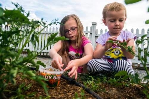 Chris Detrick  |  The Salt Lake Tribune Caitlin Cottan, 7, and Kendra Cottan, 3, release ladybugs into the garden during the ninth annual Ladybug Festival at Eastlake Gardens in Daybreak on Friday. The release of ladybugs at the annual festival is an effort to educate the community on organic gardening and the benefits of utilizing ladybugs to deter pesky aphids that feed on plants.