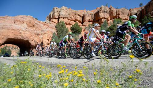 Al Hartmann  |  The Salt Lake Tribune  On Aug. 5, 2014, the peloton of more than 120 riders passed through the tunnels in Red Canyon during the second stage of the Tour of Utah. While the National Park Service has not confirmed the route of the 2016 Tour of Utah, the Utah Department of Transportation has granted a permit for the race to use the 24-mile stretch of State Route 9 through Zion National Park from Springdale to Mt. Carmel Junction. Such a route would climb the switchbacks on the canyonís east wall, pass through the tunnel and exit the park heading east.