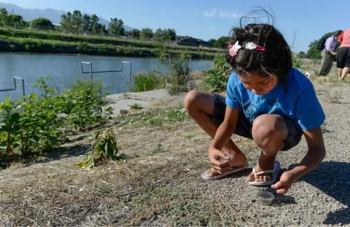Francisco Kjolseth | The Salt Lake Tribune Volunteer Ember Shearer Davis, 11, releases tiny Puncture Vine Weevils  along the Jordan River trail in hopes of ridding the area of goatheads, the invasive weed with those awful thorny barbs.