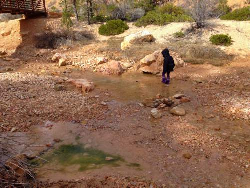 Erin Alberty     The Salt Lake Tribune  A young hiker takes her galoshes into the stream in Water Canyon, near the trail to Mossy Cave on March 31, 2016 in Bryce Canyon National Park.